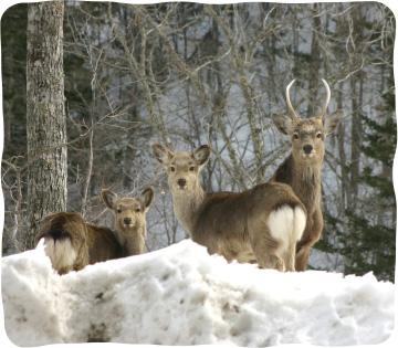 冬の鹿撃ち
